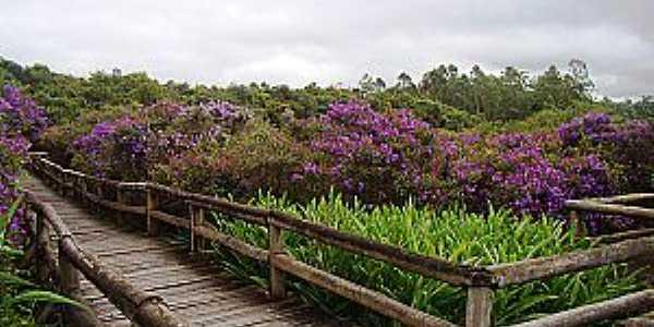 Embu-Guaçu-SP-Flores na Passarela do Parque da Várzea-Foto:www.ambiente.
