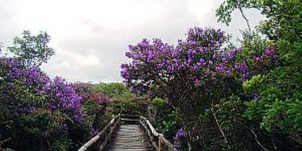 Embu-Guaçu-SP-Flores na Passarela do Parque Estadual da Várzea-Foto:www.ambiente.