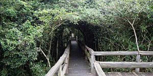 Embu-Guaçu-SP-Túnel Verde na Passarela do Parque da Várzea-Foto:www.ambiente.