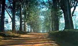 Fazenda Velha - Estrada