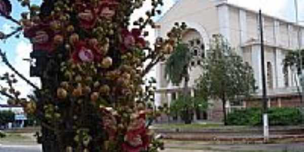 Flores exóticas na praça-Foto:rose de marchi
