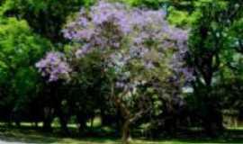 Flora Rica - Flora Rica - SP, Por Adriano Souza