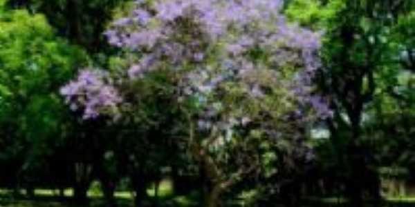 Flora Rica - SP, Por Adriano Souza