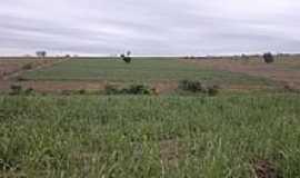 Guaianas - Vista da região agrícola de Guaianas-SP-Foto:Agrodoce