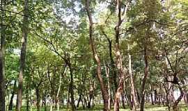 Guará - Guará-SP-Bosque do Ginásio de Esportes-Foto:fernando.lubito