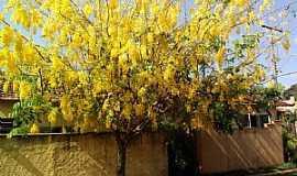 Guará - Guará-SP-Ipê amarelo,linda imagem na rua de Guará-Foto:fernando.lubito