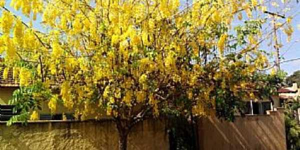 Guará-SP-Ipê amarelo,linda imagem na rua de Guará-Foto:fernando.lubito