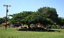 Guzolândia - Guzolândia-SP-Área rural-Foto:mauronesic