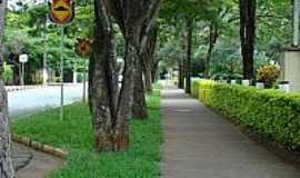 Holambra - Holambra-SP-Alameda arborizada-Foto:Leandro A lluciano