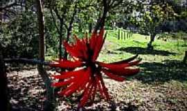 Hortol�ndia - Flores no Jardim Amanda em Hortol�ndia-SP-Foto:Silva43