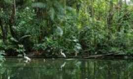 Iguape - Aldeia, Por Zeli Curcio
