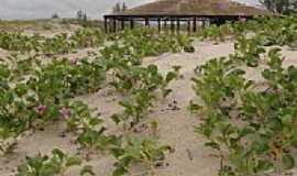 Ilha Comprida - Praia do Boqueirão em Ilha Comprida-SP-Foto:Daniel souza Lima