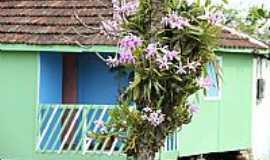 Ilha Diana - Ilha Diana-SP-Orquídeas em casa típica da Ilha-Foto:Marco Silva
