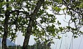 Ilhabela - Vista da Marina em Ilhabela-SP-Foto:PatyPeceguiniViana