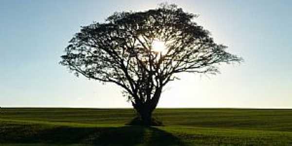 Itaberá-SP-Árvore solitária no entorno da Estação Ecológica-Foto:Diego Rodrigo Ferraz