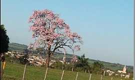 Itajobi - Itajobi-SP-Paineira rosa e a cidade-Foto:Luzia Frata