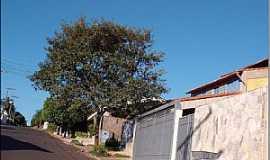 Itajobi - Itajobi-SP-Rua da cidade-Foto:Luzia Frata