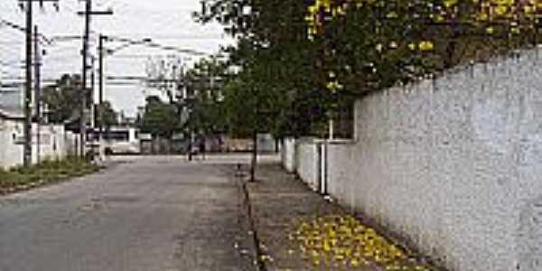 Ipê amarelo na Rua Rio São Francisco em Itaquaquecetetuba-Foto:Kacinskas