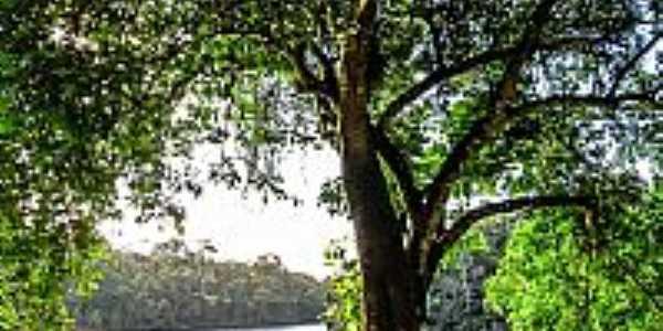 Pirajá-BA-Bela árvore na beira do Lago no Parque São Bartolomeu-Foto:Sidney Zaratustra