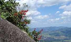 Joanópolis - Flores na escosta da Serra em Joanópolis-Foto:Altemiro Olinto Cris…