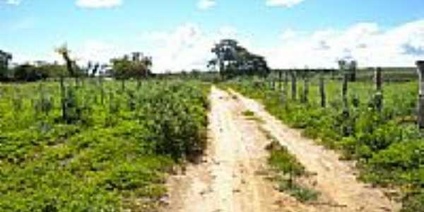 Estrada de terra na área rural em Piripá-BA-Foto:Cássio - jacaraci