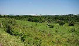 Juquiratiba - Vegetação-Foto:carlos.kardoso