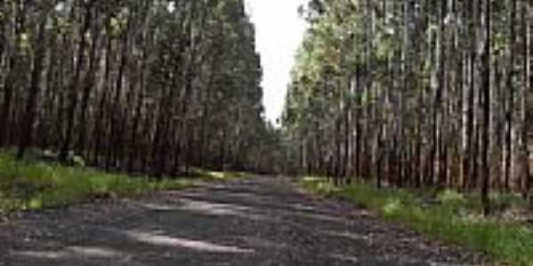 Estrada da Usina de Lobo-Foto:J.Roberto B. Lamoso …