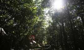 Lorena - Floresta Nacional de Lorena – ICMBIO