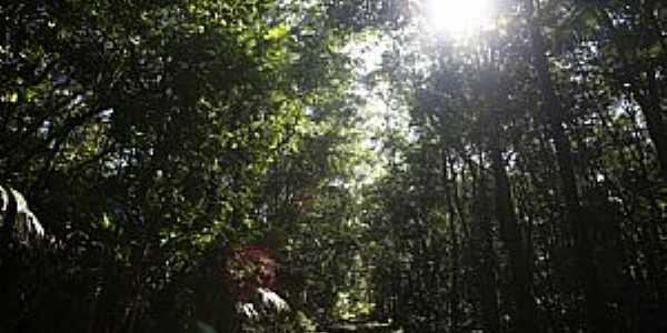 Floresta Nacional de Lorena – ICMBIO