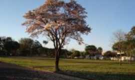 Mogi-Guaçu - Jardim IPê Três - Moji-Guaçu, SP, Por Rospo MATTINIERO