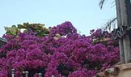 Monte Mor - Primavera