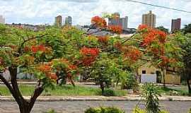 Ol�mpia - Ol�mpia-SP-Flamboyant na Avenida e ao fundo a centro-Foto:Urias E. Takatohi