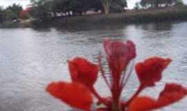 Porto Novo - Flor de Flanboyant, Por Radival da Costa Nery júnior