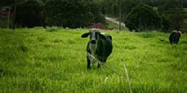 Pastagem em Ouroeste-SP-Foto:klausgermano
