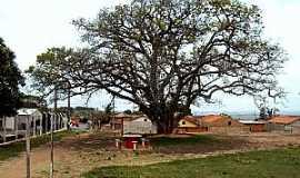 Paulópolis - Paulópolis-SP-Grande árvore na pracinha-Foto:Fabio Vasconcelos