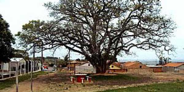 Paulópolis-SP-Grande árvore na pracinha-Foto:Fabio Vasconcelos