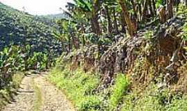 Pedro de Toledo - Plantação de bananas