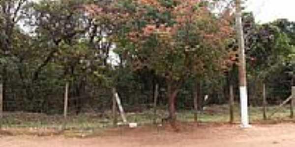 Reserva Florestal-Foto:LuziACruzFrata
