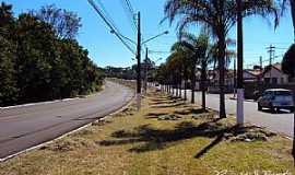 Pirassununga - Pirassununga-SP-Coqueiros na Rua Germano Dix-Foto:Reginaldo Resende