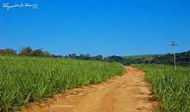 Pirassununga - Pirassununga-SP-Estrada e cana de açucar-Foto:Reginaldo Resende
