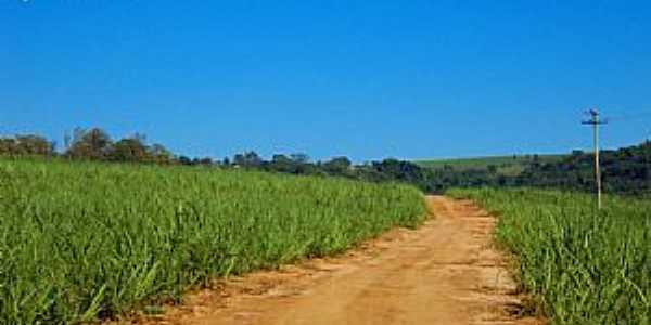 Pirassununga-SP-Estrada e cana de açucar-Foto:Reginaldo Resende