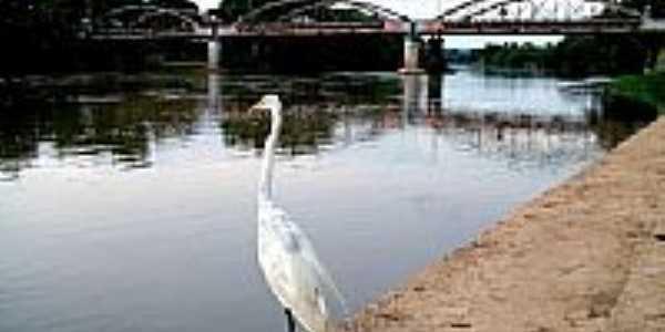 Rio Mogi Gua�u por retsumanga