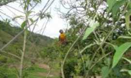 Reden��o da Serra - arara azul em reden��o , Por Jos� Carlos