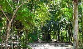 Registro - Bosque Municipal