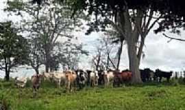 Santa Isabel do Marinheiro - Área rural-Foto:hvaleiro