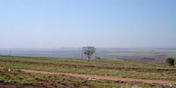Plantação de cana-Foto:Leonidas Cichetto