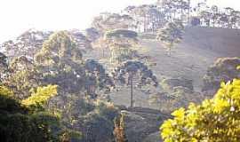 Santo Antônio do Pinhal - Santo Antônio do Pinhal-SP-Araucárias-Foto:Madalena Rath