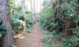 São Lourenço da Serra - passeios ecológicos, Por pedro pedroso