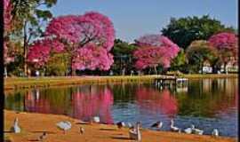 São Paulo - São Paulo-SP-Aves no Lago do Parque do Ibirapuera-Foto:AntonioJVidaL