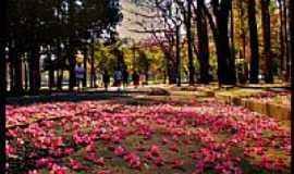 São Paulo - São Paulo-SP-Trilha de flores no Parque do Ibirapuera-Foto:AntonioJVidaL